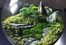 florarium / plants