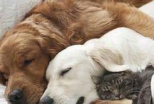 Dieren liefde ❤