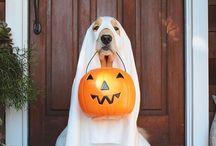 kira halloween