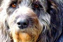 """POSADOS PERRUNOS / Muchos de los perros que han pasado por mi vida y que podeis ver en mi blog """"Vida de Perros...""""  http://www.jrbatalle.com/blog/"""
