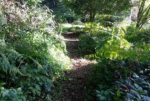 Paadjes in de tuin