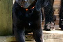 Black labs..my all <3