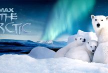 To the Arctic - IMAX Film / This adventure tells the ultimate tale of survival. Narrated by Oscar® winner Meryl Streep, the film takes audiences on a never-before-experienced journey into the lives of a mother polar bear and her twin seven-month-old cubs as they navigate the changing Arctic wilderness they call home. / by Reuben H. Fleet Science Center