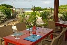 Cottages and Condos / Casual and comfortable, oceanfront or garden settings..serene and special..all amazing..all warm and welcoming .. Check out www.bonairecaribbean.com for details.