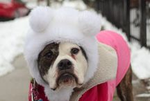 Bαвy ιтs cσℓ∂ συтѕι∂є / Furbabies in winterhabits..