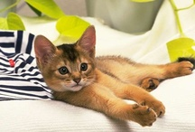 Kitties :D my love / by Alesha Lokeh
