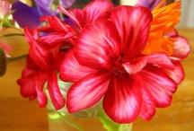 Flores, flora y Jardines