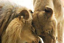 Animals  / by Angela Lefler
