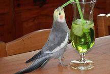 Humour / Humour autour des Cocktails