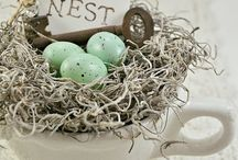 Nests / by Diane Meredith