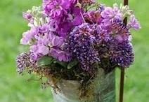 vasos e jardim