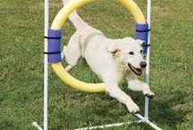 Dog Agility & Outdoor Fun