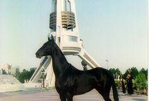 Konie AKHAL TEKE