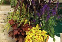 kytičky v květináči