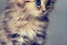 kedişler