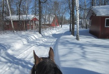 Winter Adventures / Pin photos of you and your horse enjoying the winter with #WinterAdventure.