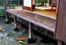Pond for Benny
