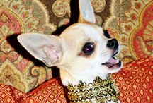 Gilt Nothings Collection by Posh Pawz