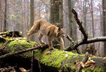 Wild Balkans / Animals and habitats in the Dinaric Arc region