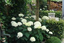 Växter/rabatter