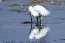 Birds in the Midlands UK / Wild Birds
