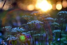 *garden ideas*