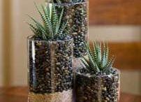 air plants and terrariums