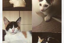 My cats / I miei due piccoli gattini adorabili nati a fine aprile...  Romeo e Lady!
