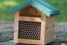 Plants & Accessories for Birds, Bees, & Butterflies
