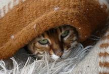 Cats / by Jennifer Martinsons