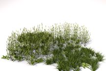 visual library : grass