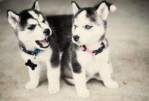 Pets! <3