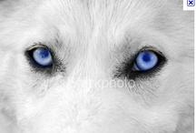 Wolves / by D. D. Falvo