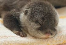 Otters / by Jani Fletcher