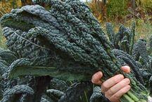 Kale Go Green / http://www.gardeners.com/how-to/grow-kale/8717.html
