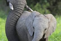 Elephants are the best creatures on the planet