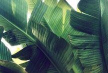 Tropical Garden Illustration