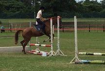 Horses/ Horse riding