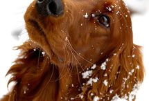 The Beauty of Animals / A fine selection of animal photography. / by ArcaNatura Natural Pet Products