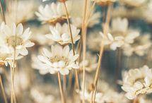 Blomster/natur