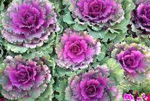 Beauty in Gardens / Gardens demonstrate Gods creativity
