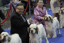 AKC/Eukanuba National Championship / Photographs and media of the beautiful dogs competing at the AKC/Eukanuba National Championship.