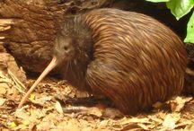 Animals: Birds NZ
