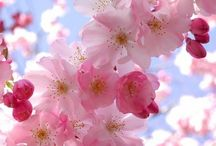 Beautiful flowers ❀