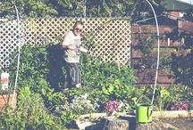Vege Garden / Our first home vegetable garden