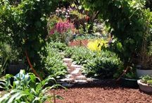 Garden - Arbours