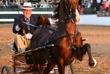 Portrait Horses
