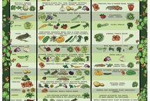 Garden/plants/trees