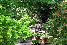 Gardens / A collection of images that hold some essence of what for me garden design is all about. A mood, a transitional space, a theatrical effect, nature holding it's breath. Space and light. Calm and serene - social and engaged