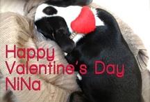 #Happy#Valentine's (Dog) Day NiNa!